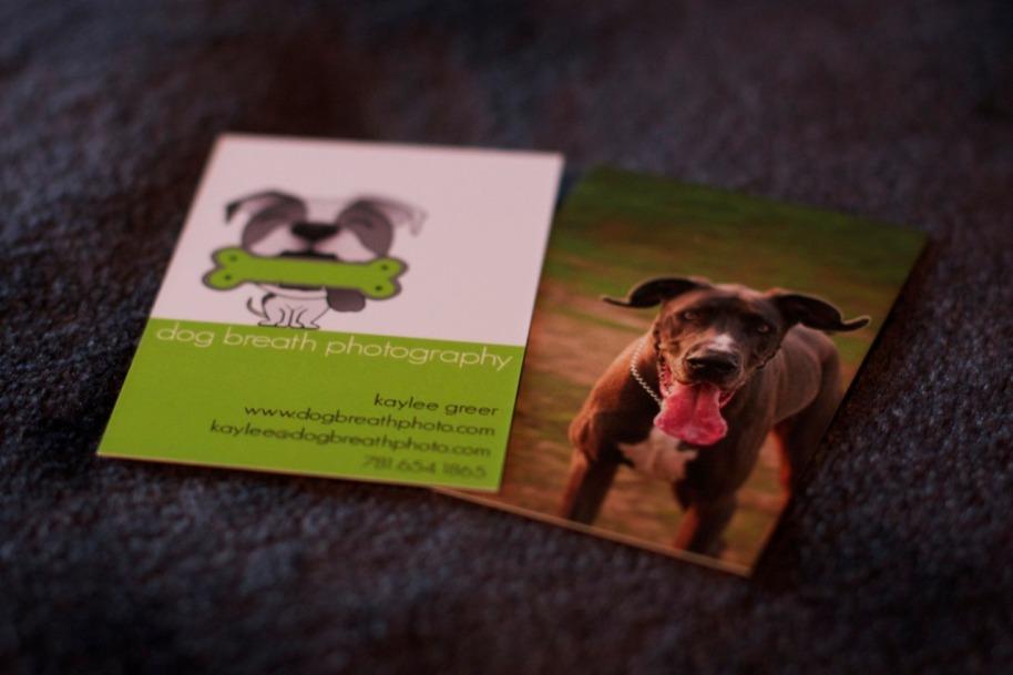 marketing   Dog Breath Photography Blog