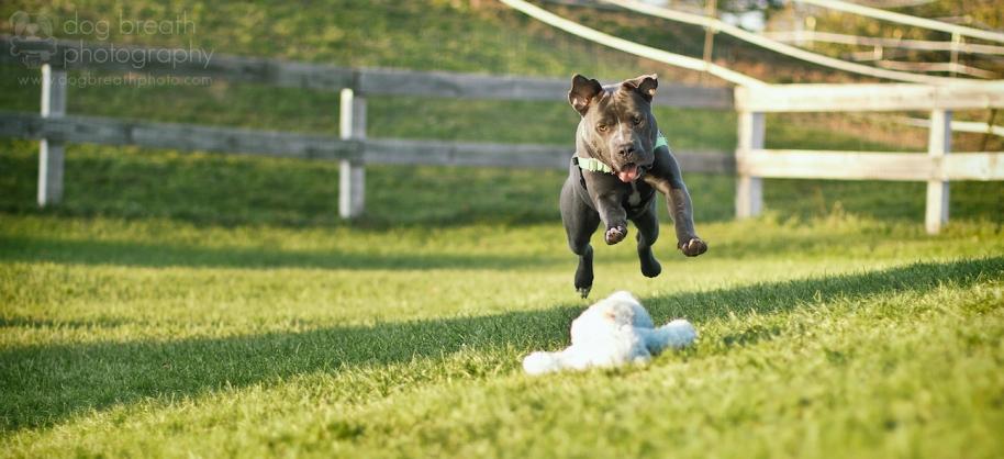 © Dog Breath Photography