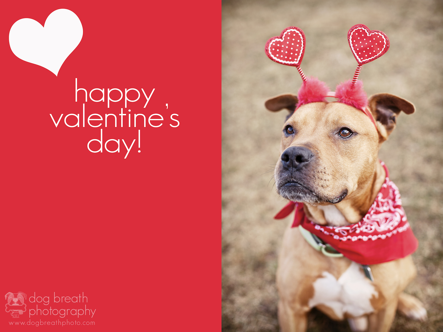 Happy valentine s day dog breath photography blog - Valentines day pictures with puppies ...