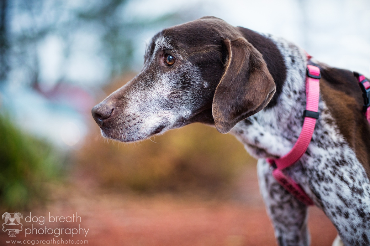 Bostondogphotographer