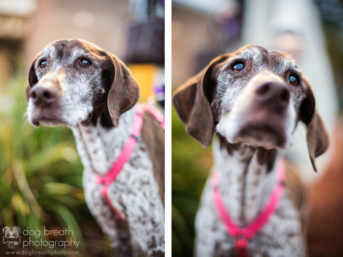 rhodeislanddogphotography