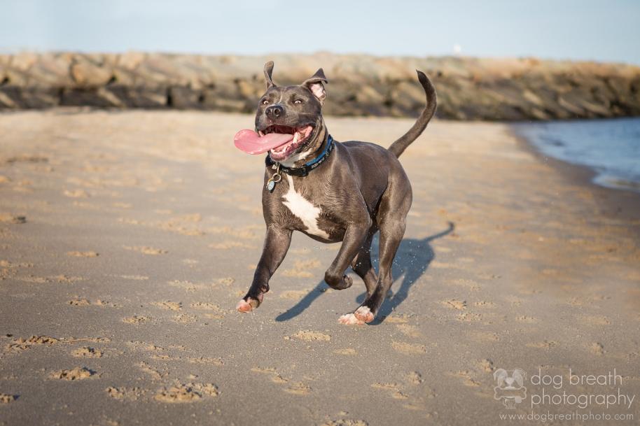 best-boston-dog-photographer
