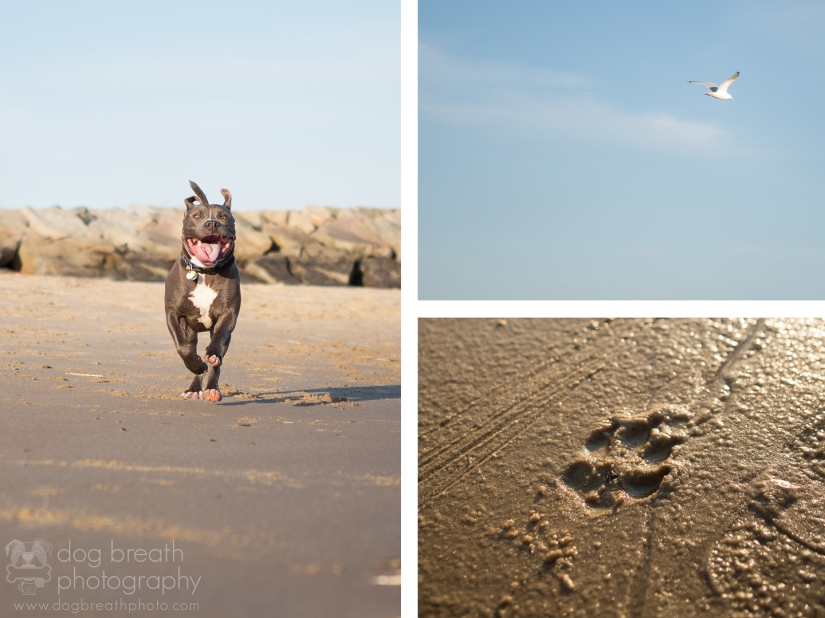 rhode-island-pet-photography