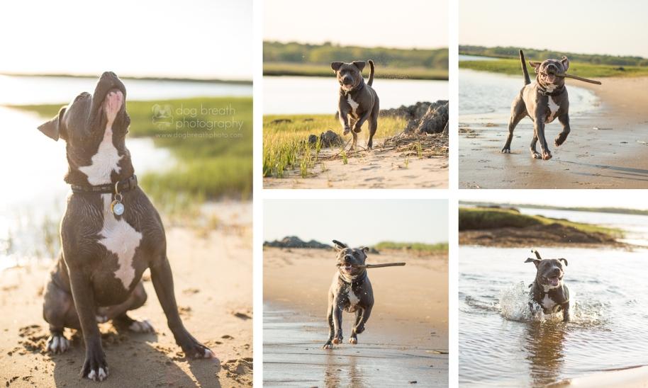 best-boston-dog-photography
