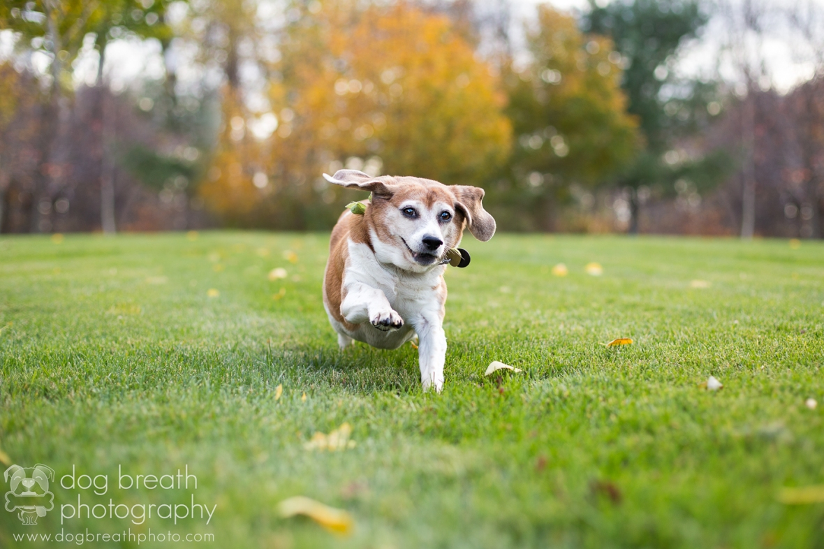 us-commercial-pet-photographer