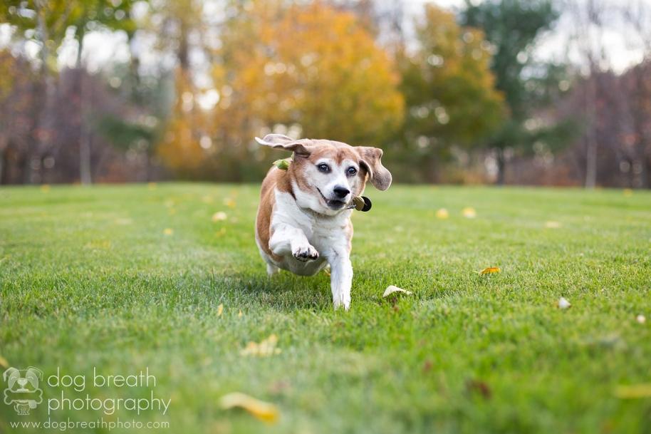 us-commercial-pet-photographer