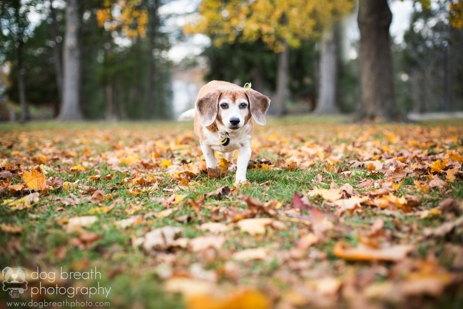 new-hampshire-dog-photography