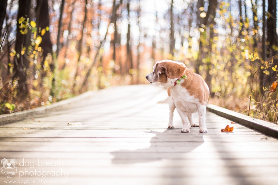 commercial-dog-photographer