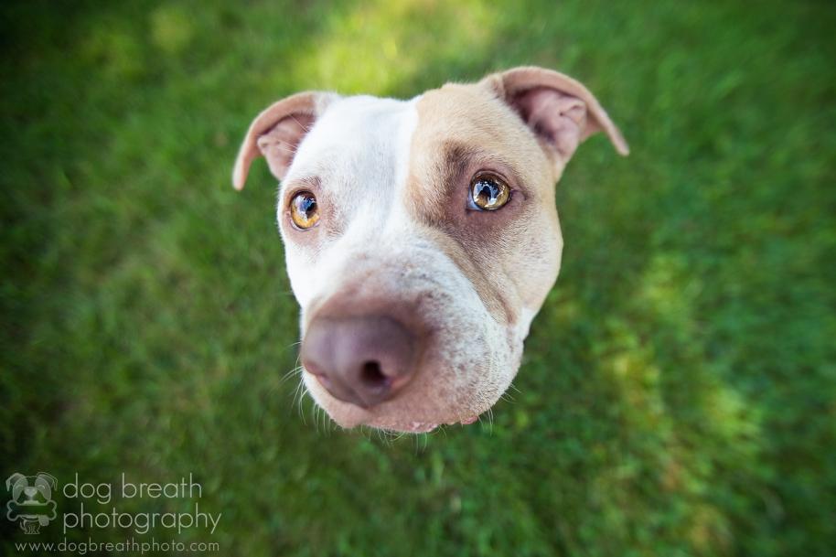 adoptable-dog