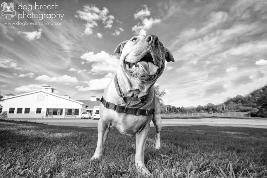 new-england-pet-photographer