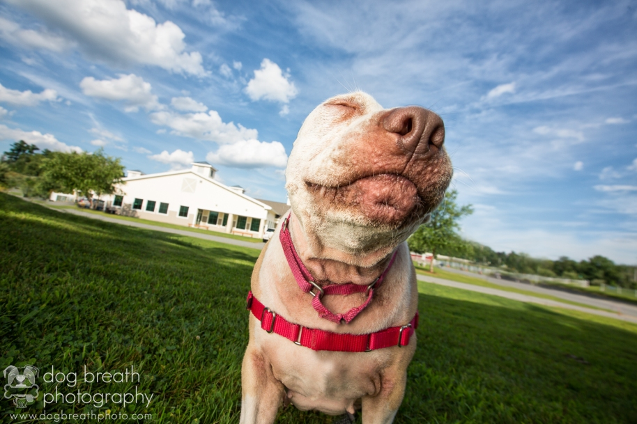 professional-pet-photographer