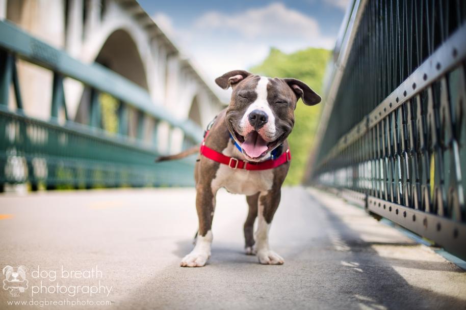 dog-breath-photography
