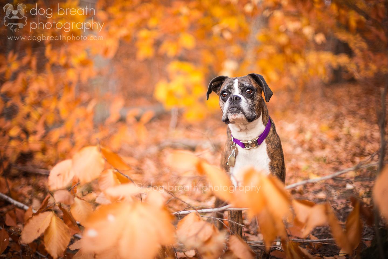 dog_breath_photography