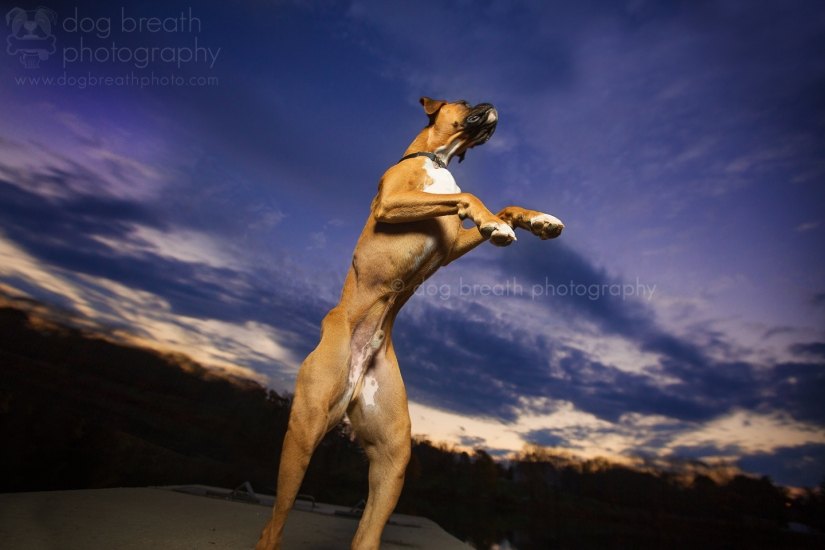 best_commercial_pet_photographer
