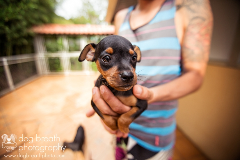 adoptable-dogs-in-costa-rica