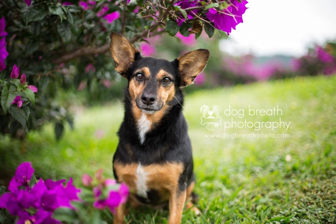 adoptable-dogs