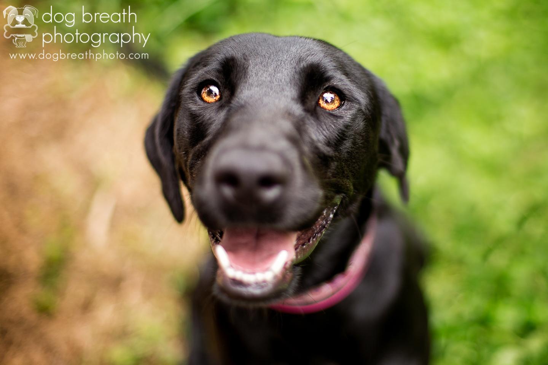 adoptable-shelter-dog
