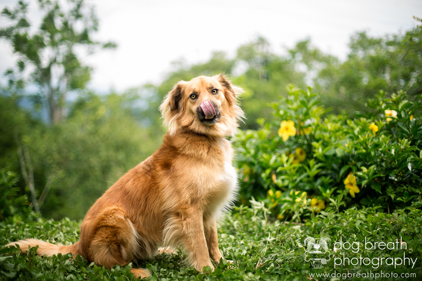 best-commercial-dog-photographer