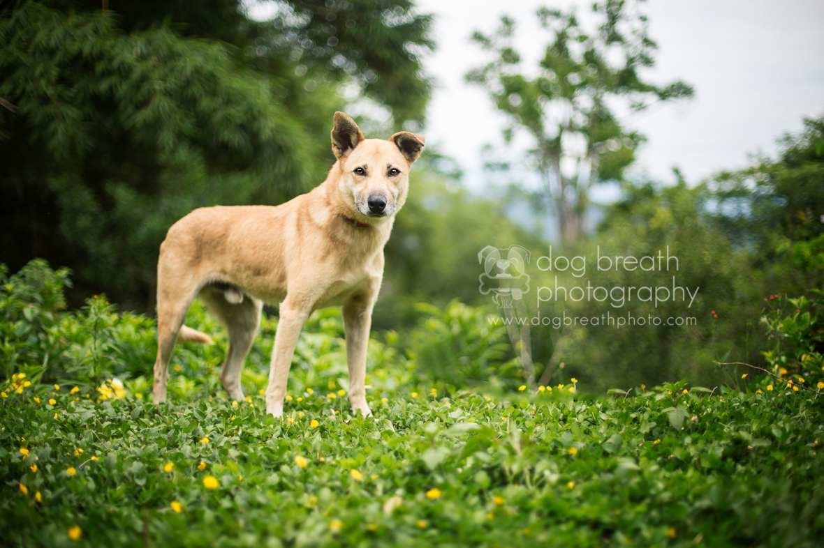 best-commercial-pet-photography