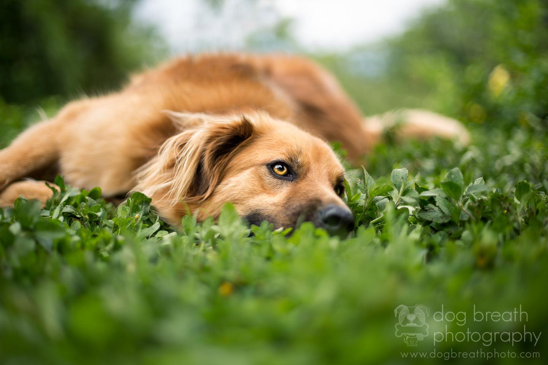 best-dog-photographer