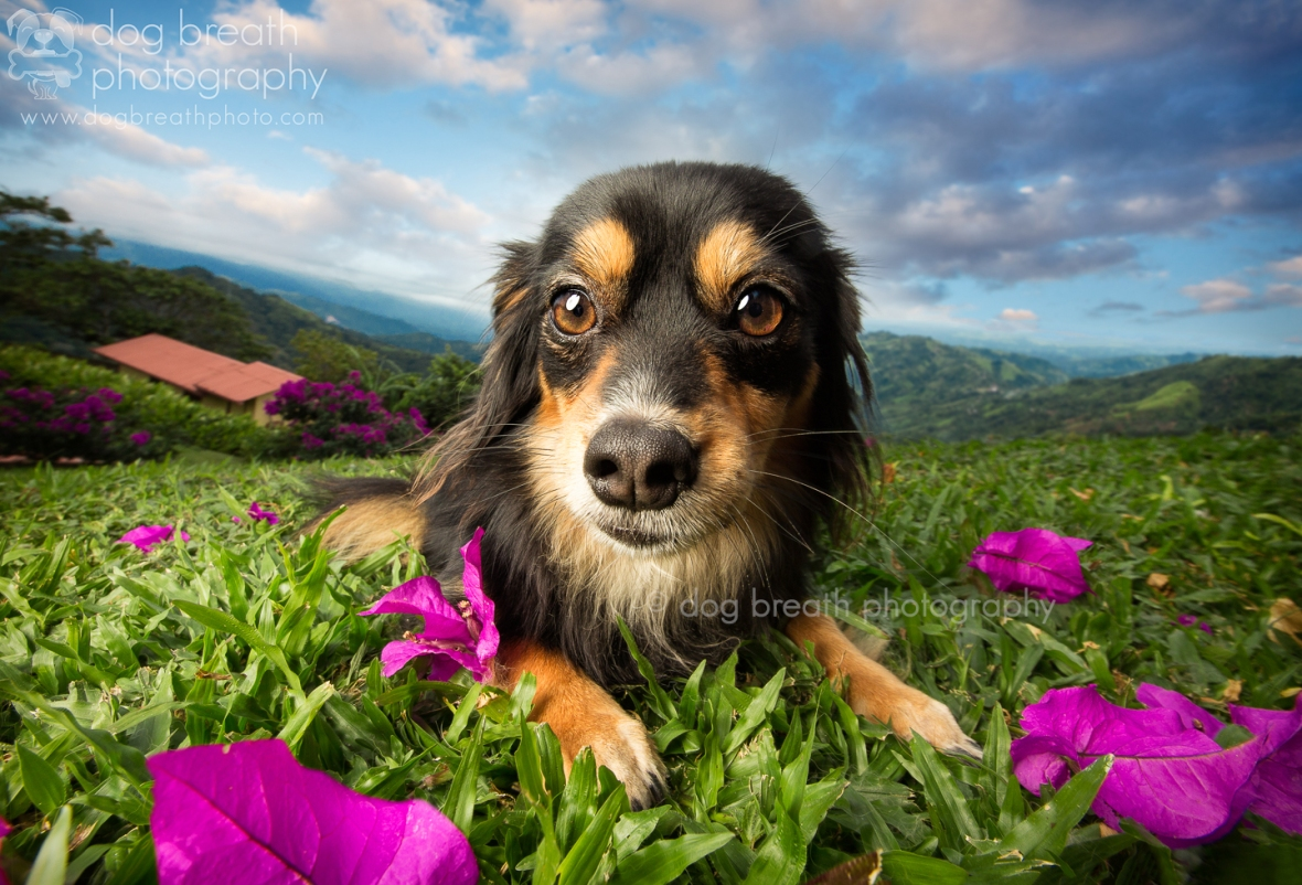 best-dog-photographers-blog