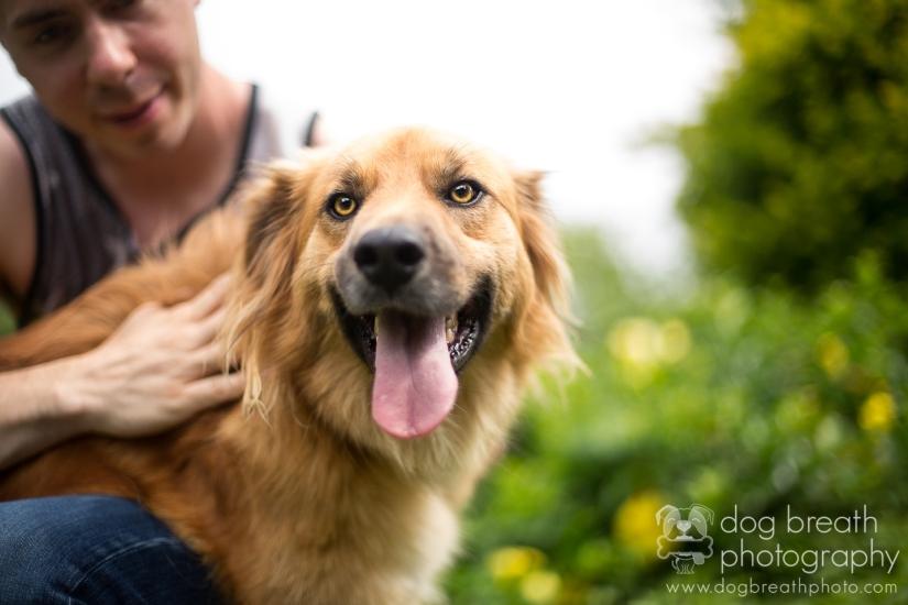 best-dog-photographers