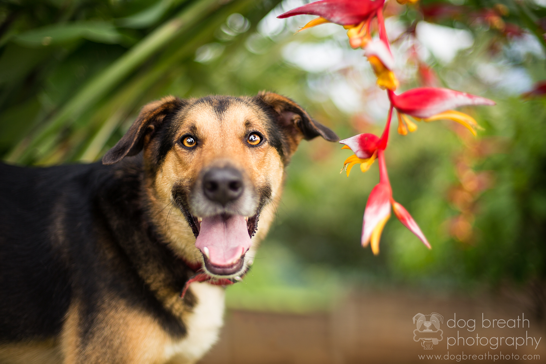 best-dog-photography-blog