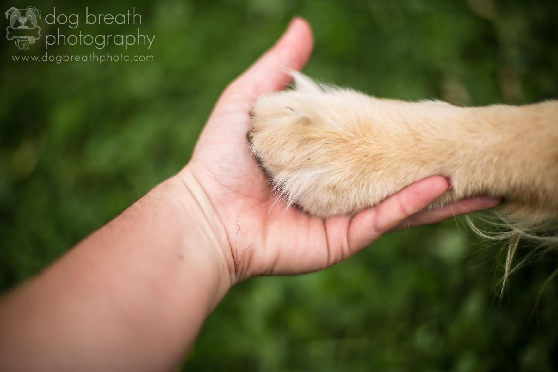 best-pet-photographer