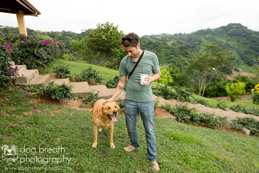 commercial-dog-photography