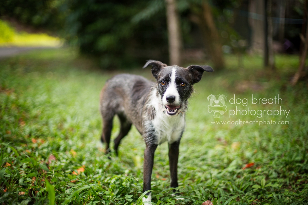 costa-rica-animal-rescue