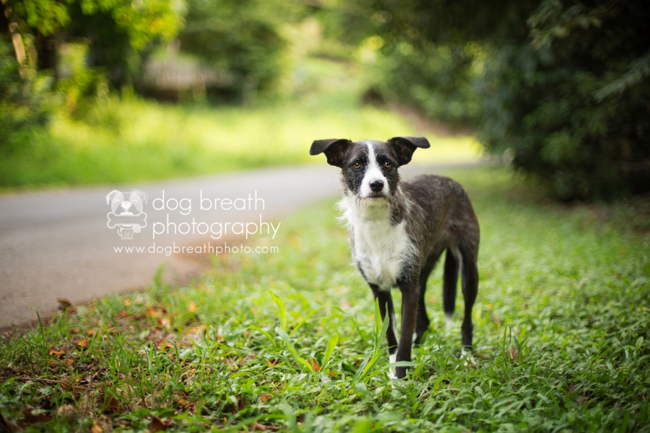 costa-rica-dog-rescue