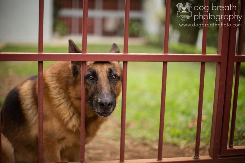 costa-rica-dog-shelter