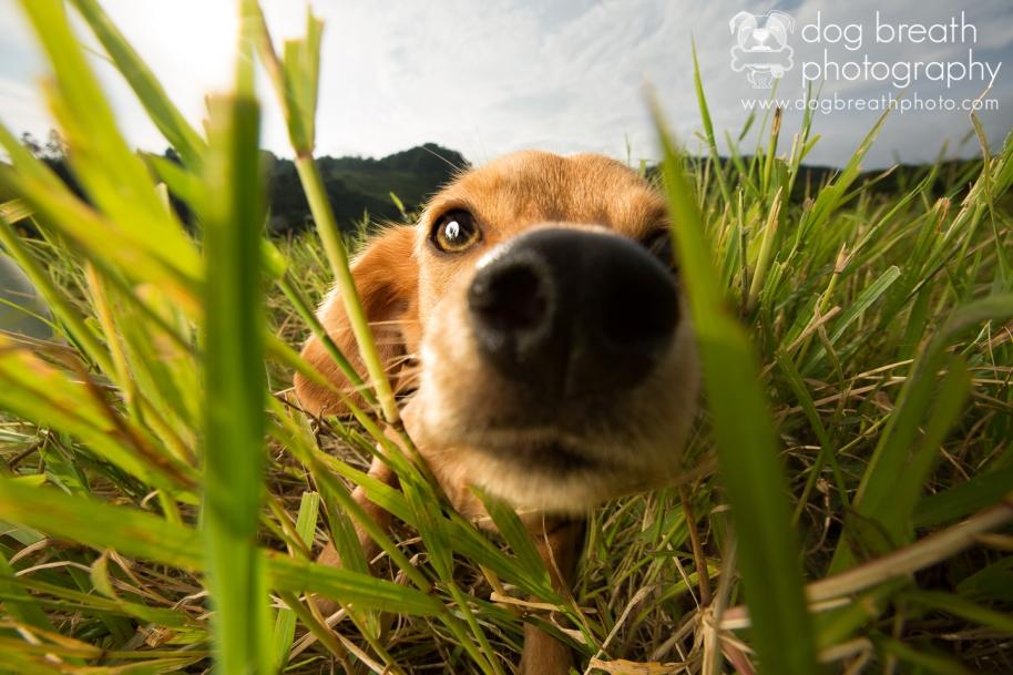 costa-rica-dog