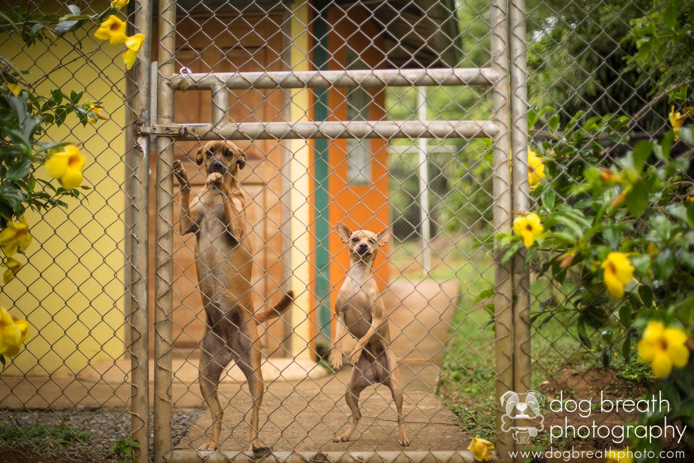 costa-rica-rescue-dog