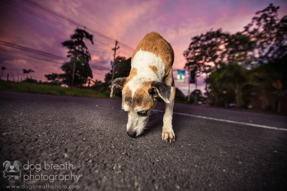 dog-photography