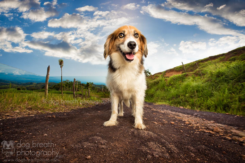 dogs-in-costa-rica