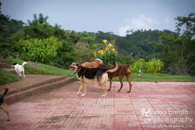 massachusetts-dog-photographers