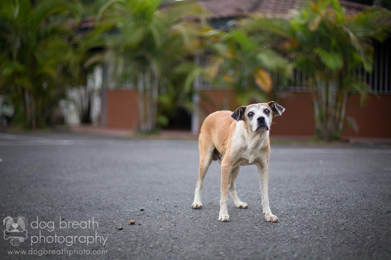 pet-photographers
