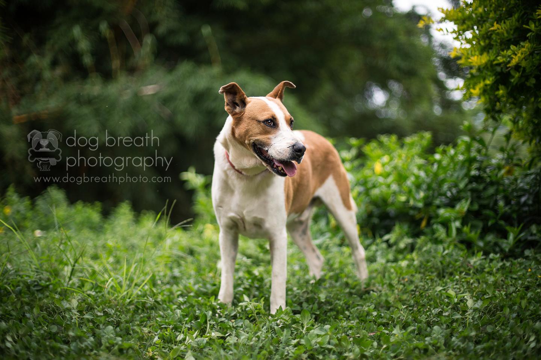 rescue-dog