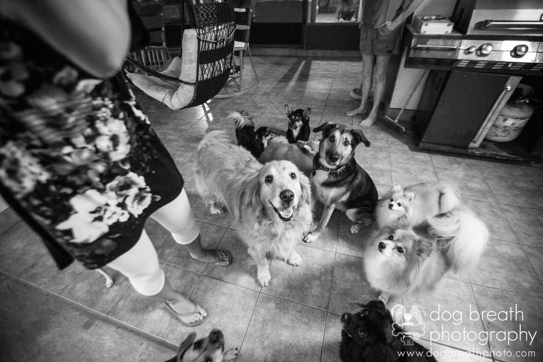 shelter-dog-photographers