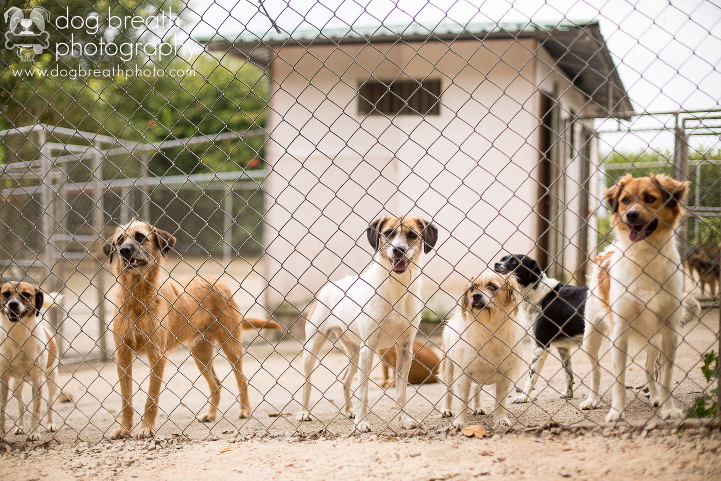 shelter-dogs