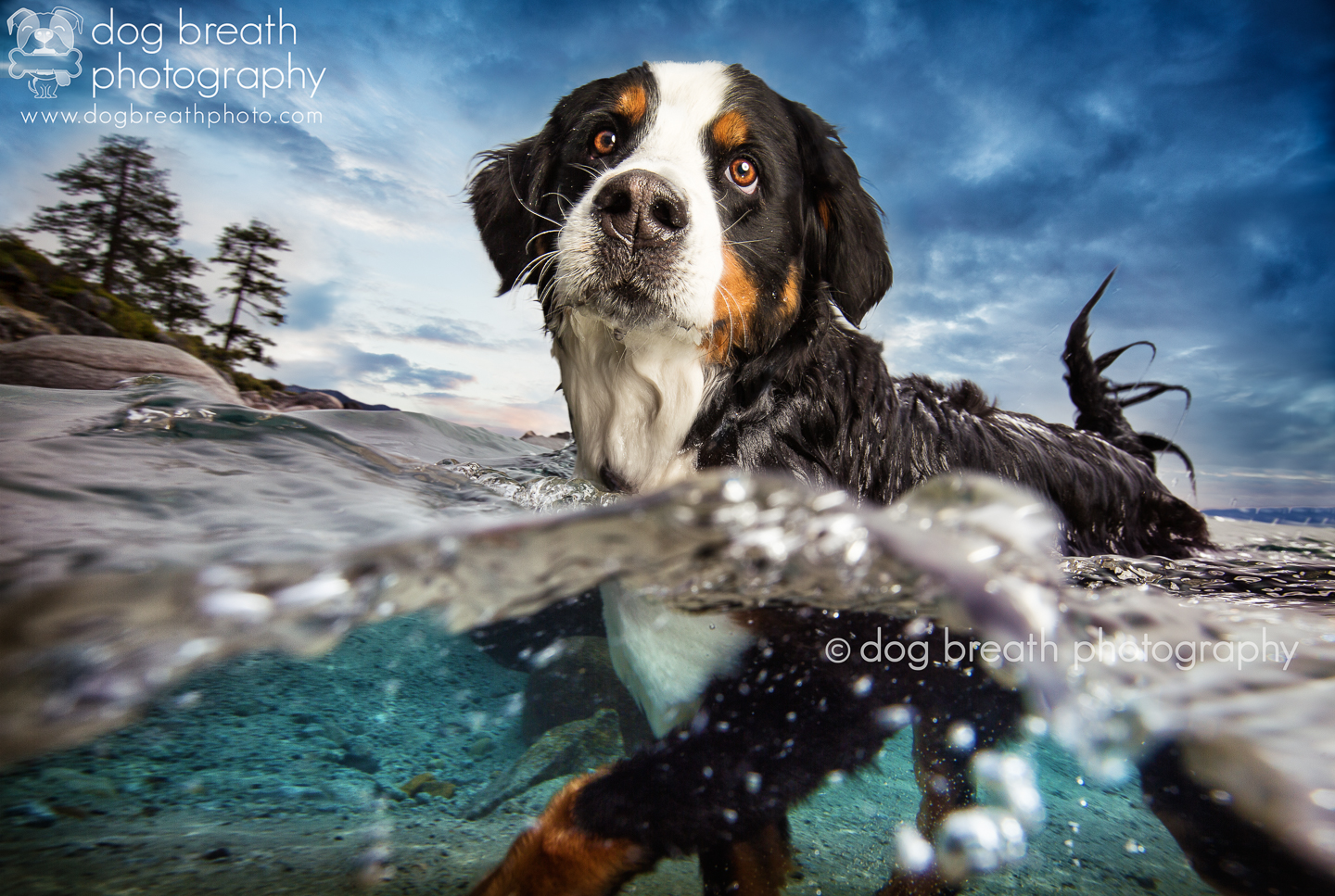 Best_Commercial_Dog_Photographer