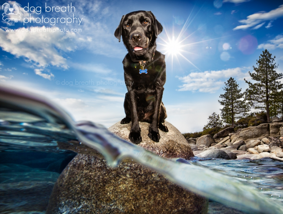 Commercial_Dog_Photographer