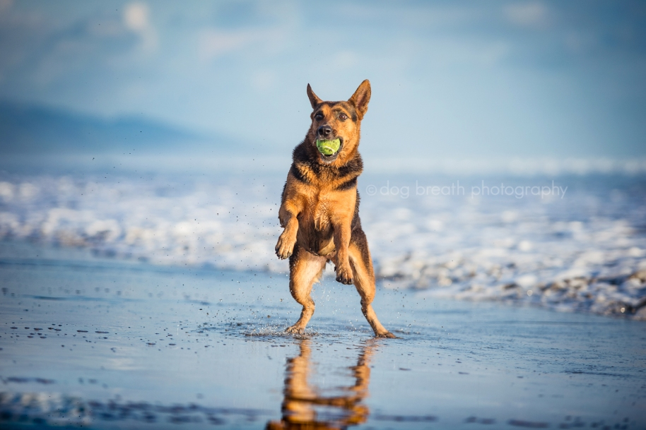 Dog Breath Photography Blog Life Is Better With A Little Dog Breath - Purpose built canine pool every dogs dream