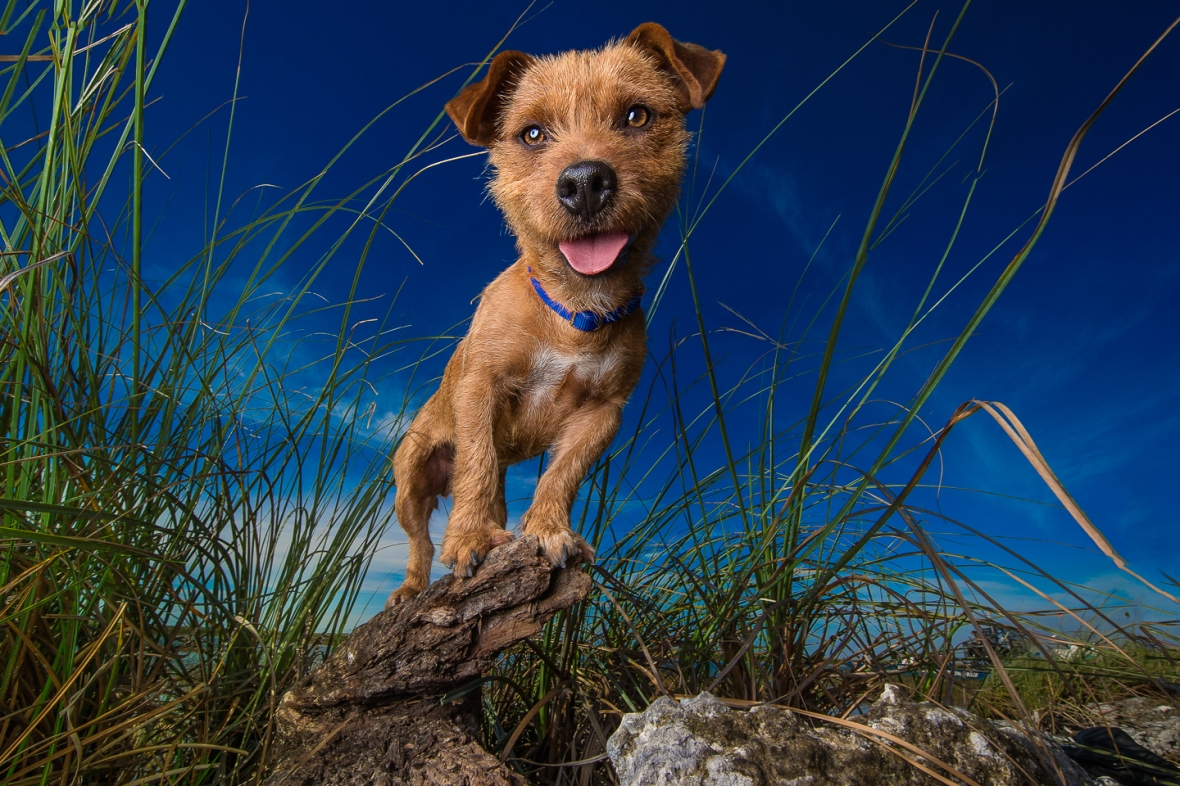 Pupparazzi-Dog